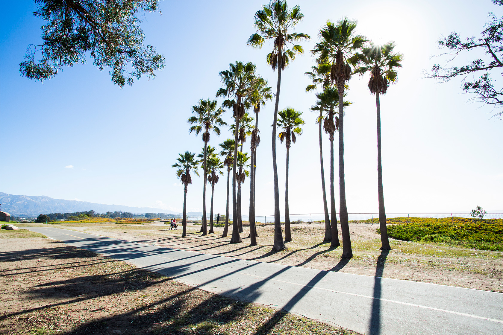 Palm trees overlooking a bike path with Goleta Beach in the background